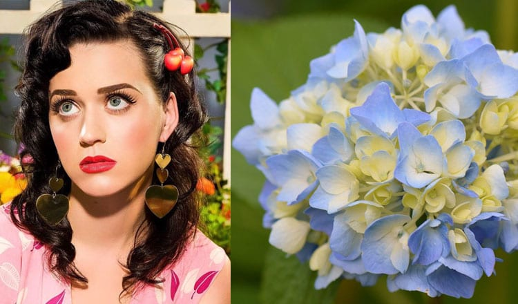 Kate Perry To Audrey Hepburn: 9 Celebrity's Surprising Favourite Flowers